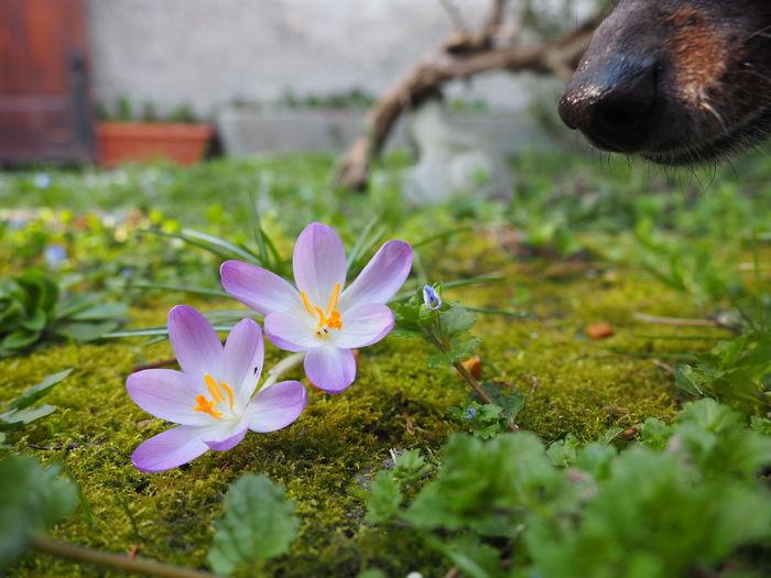 curiosità Cane Flower Flower Head Rural Scene Social Issues Close-up Grass Stamen Crocus Pistil Passion Flower Botany Wildflower