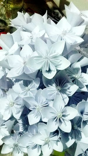 Origami Nofilternoedit Nofilter Nofilter#noedit Flower Flowers Flower Petal Beauty In Nature Fragility Nature No People Flower Head Day Blooming Freshness Close-up Outdoors