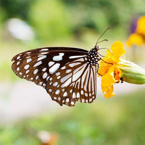 Butterflies In The Summer First Eyeem Photo