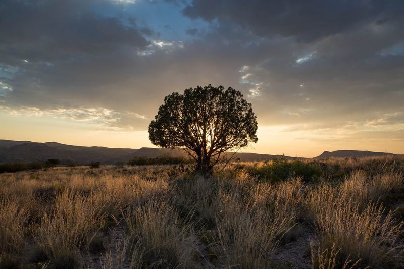 View Of Trees On Landscape At Sunset
