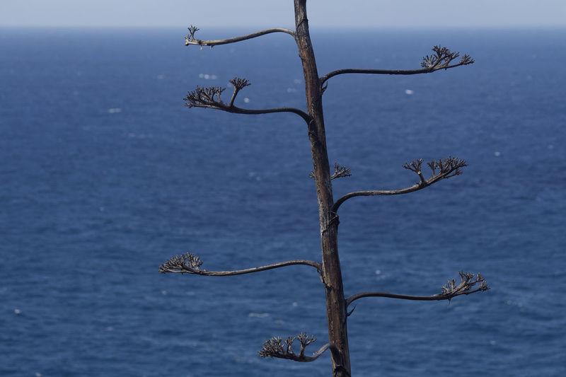 Ocean EyeEm Nature Lover EyeEmNewHere Canarias Tenerife Ocean Roadtrip Oceano Pitera Horizon