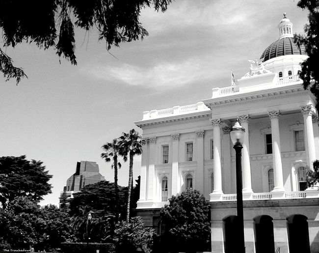 """The Architect - 2016 EyeEm Awards """"A different view of the California State Capitol, from under the trees"""" ⛲not my First Eyeem Photo(actually it's my 600th image, yeah! ) Building Exterior Buildings Architecture Buildings & Sky Building Structures Building And Trees Black And White Photography Tree Porn Monochrome Eyeemphotography Best Eyeem Pics Week On Eyeem EyeEm Gallery Eye4photography  EyeEm Best Shots Tree_collection  No Need To Escape, Im In Wonderland! From My Point Of View Photo Of The Day in Sacramento, California"""