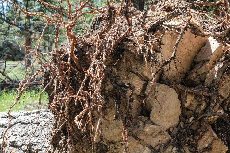 I've got no roots on the ground... Fallen Tree Plant Life Tree Life Beauty In Nature Branch Close-up Day Dead Plant Dead Tree Deep Roots Forest Nature No People Outdoors Roots Roots Of Life Roots Of Tree Tranquility Tree Tree Trunk