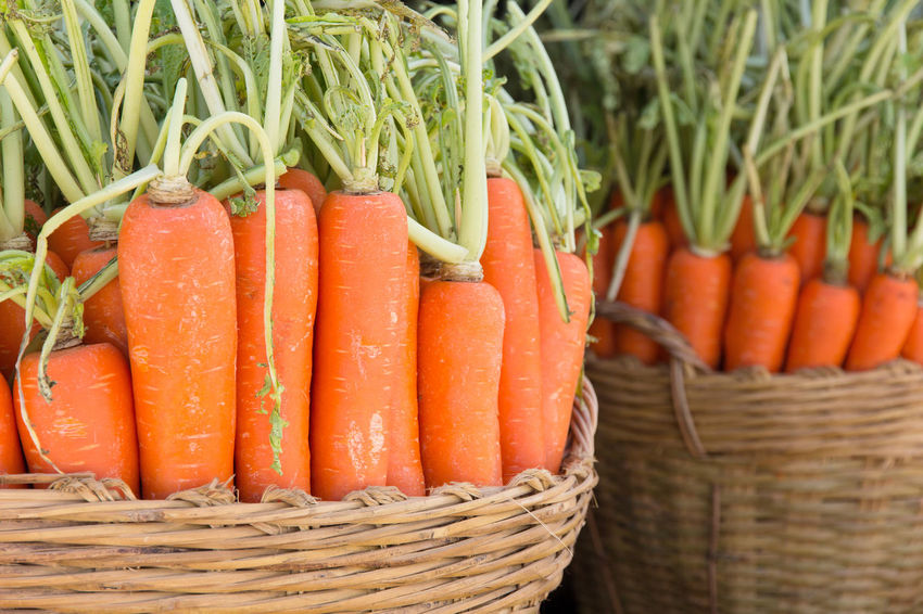 Basket Carrot Carrots Close-up Day Farm Garden Food Food And Drink Fresh Freshness Healthy Eating No People Orange Color Organic Food Outdoors Vegetable