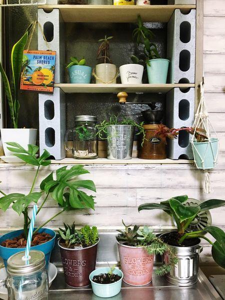 Kitchen DIY DIY At Home Plant Succulent EyeEm Enjoying Life Japan Enjoy Myhome MyHOUSE RENT EyeEm Best Shots EyeEm Gallery Love