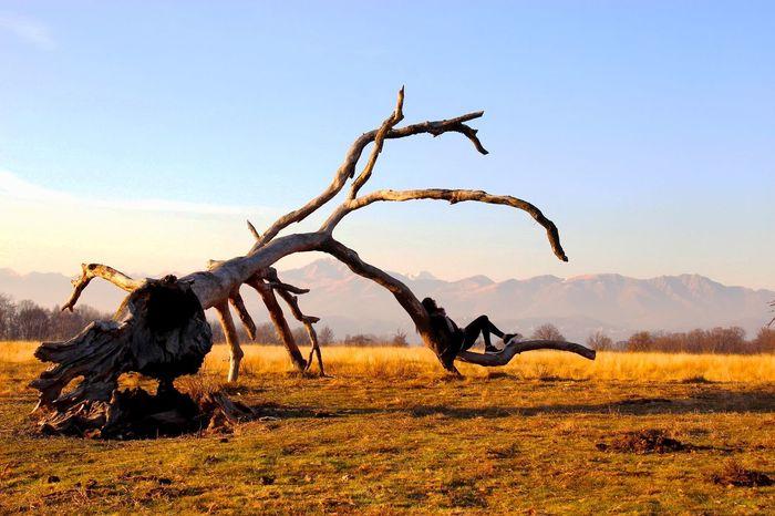 Baraggia, Biella Monterosa Albero Dead Tree Winter Esplorando Innamoratidelbiellese