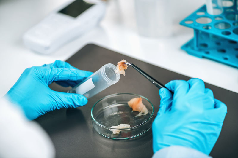 Food safety and quality control - testing of sea fish