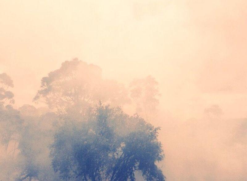 Bushfire in Sydney