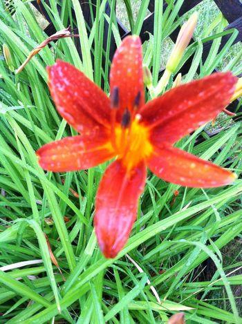 Flower Flowerporn After the rain