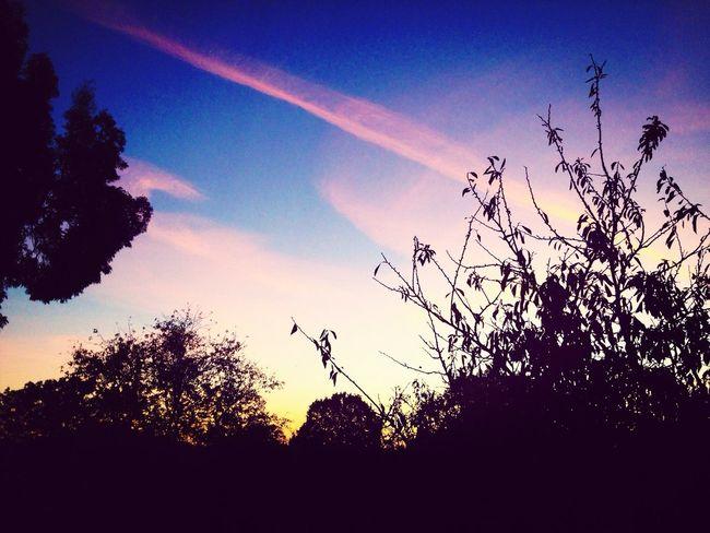 Sunrise Sky_collection Skyline Trees