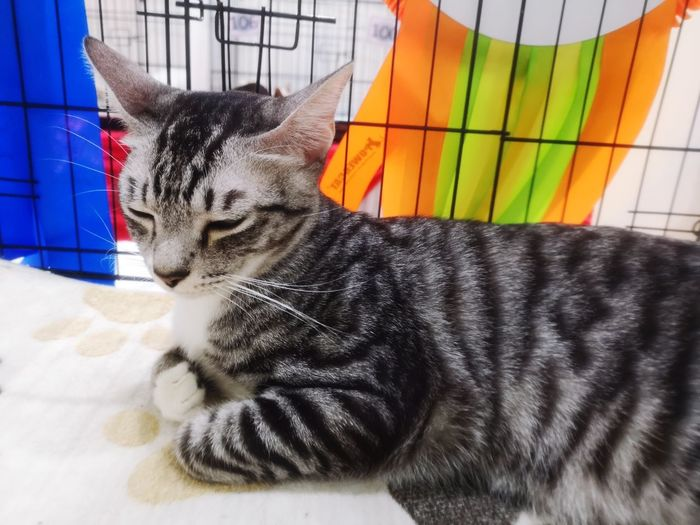 Sleeping cat Pets Feline Domestic Cat Relaxation Close-up Cat Kitten Adult Animal Animal Face Tabby Whisker Sleeping Cage Pet Bed