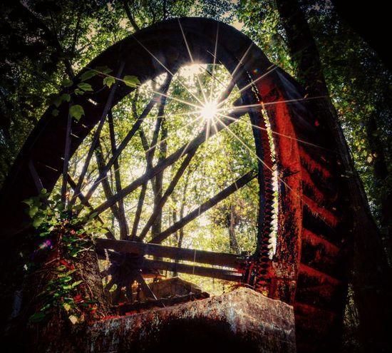 Sunlight Sunbeam Architecture Millwheel Yeahthatgreenville Sun Forest Tree Abandoned
