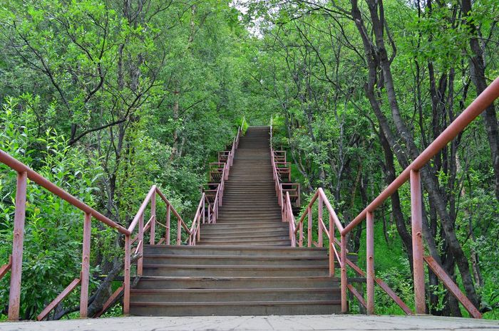 Bamboo - Plant Beauty In Nature Day Footbridge Forest Growth Hand Rail Nature No People Outdoors Railing Staircase Stairs Steps Steps And Staircases The Way Forward Tranquility Tree Lost In The Landscape Be. Ready. The Graphic City