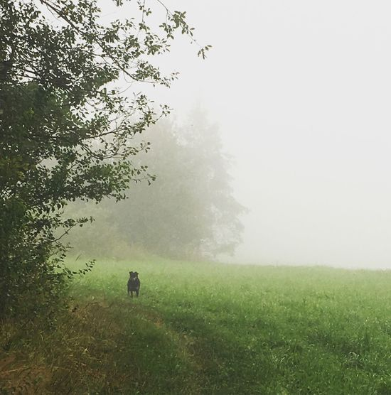 Dog Real Friend Fog Grass Field Tree Nature Foggy Growth Mist Landscape Beauty In Nature Day Hazy  Outdoors Scenics Tranquility Tranquil Scene Green Color Sky Real People One Person