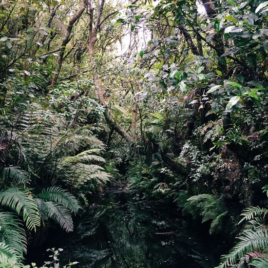 reflection of jungle plants on a water surface Backgrounds Beauty In Nature Branch Day Forest Full Frame Green Green Green Color Growth Jungle Lake Taupo Lush Foliage Nature New Zealand Non-urban Scene Outdoors Plants Reflection Scenics Taupo Tranquil Scene Tranquility Tree Water