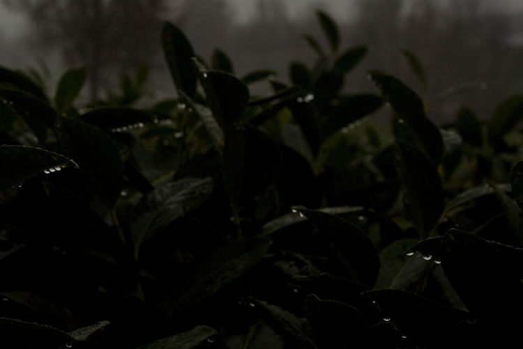 #capturetomorrow Plant Part Leaf Nature Close-up Focus On Foreground No People Drop Rain Freshness Capture Tomorrow