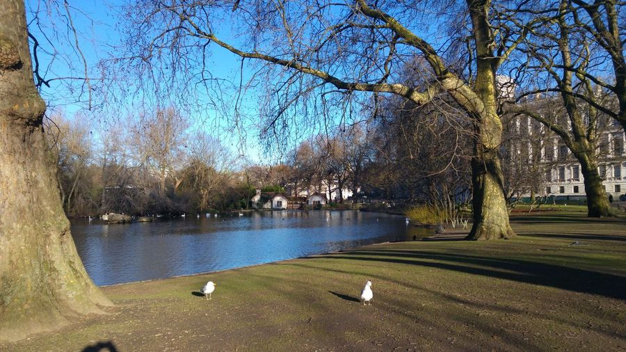 Taking Photos Relaxing St James Park London  Birds🐦⛅ Blue Sky Water Reflections Landscape_Collection Landscape_photography Great Atmosphere