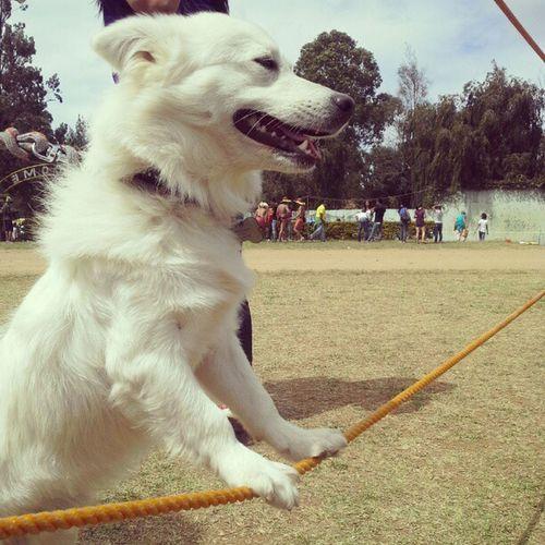 Iura is also enjoying the show... ^^ Dogs Animals Festival Panagbenga autofollow instafollow instafollowback instagram personal
