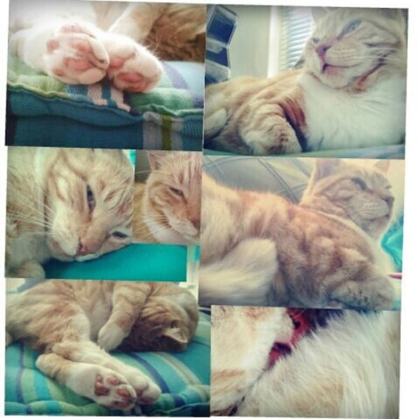 cat collage Cats Lazy Sleepy Love