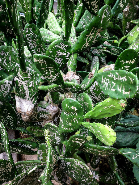 Botanical Botanical Gardens Cacti Cacti Garden Cactus Cameron Highlands Canon350D Close-up Couple Couples Green Color Growing Iwashere Leaf Leafs Malaysia Names Pattern Pattern Pieces Patterns In Nature Sign Signs Tourists Traveling In Malaysia Traveling Malaysia