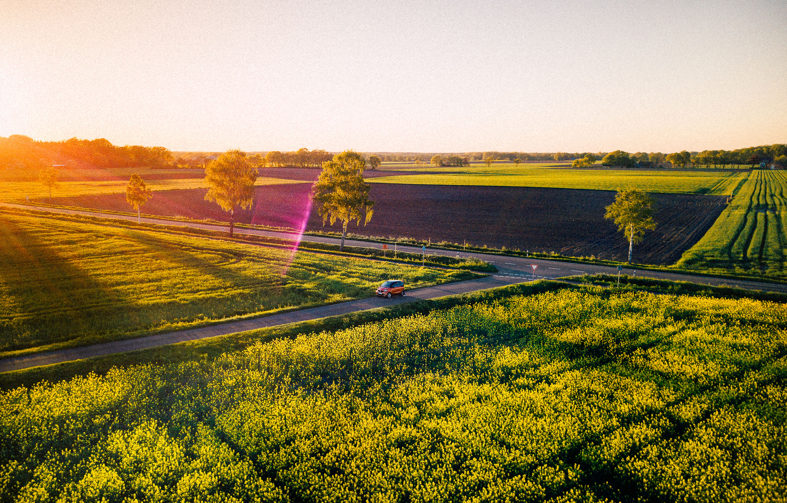 sky, landscape, beauty in nature, tranquility, tranquil scene, plant, environment, field, scenics - nature, clear sky, nature, land, flower, no people, rural scene, growth, copy space, agriculture, flowering plant, yellow, outdoors, lens flare, purple