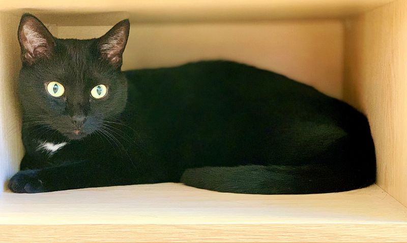 """""""Box Cat"""" Beautiful black cat enjoying a peaceful moment in the lower section of a nightstand. Cat Portrait Portrait Black Cats Black Cat Cats Of EyeEm Cats Domestic Cat Cat Feline Mammal Animal Animal Themes Pets Domestic Animals Resting"""