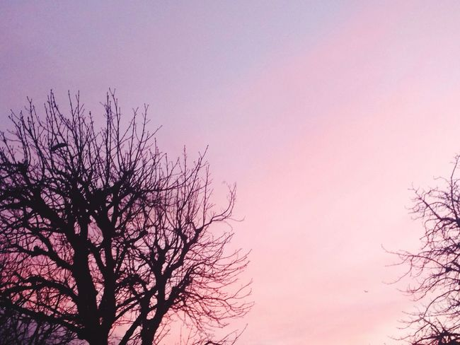 Cotton candy in the sky🍥🍥