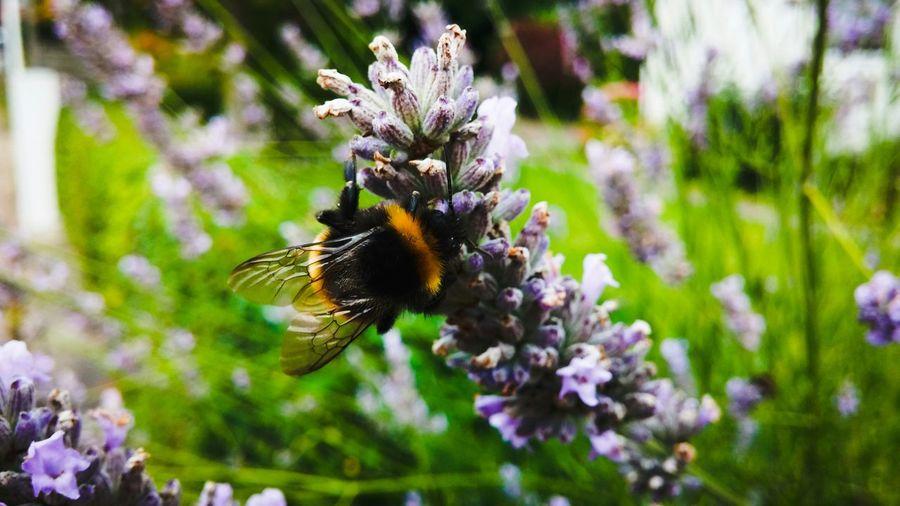 Beutiful  Bee