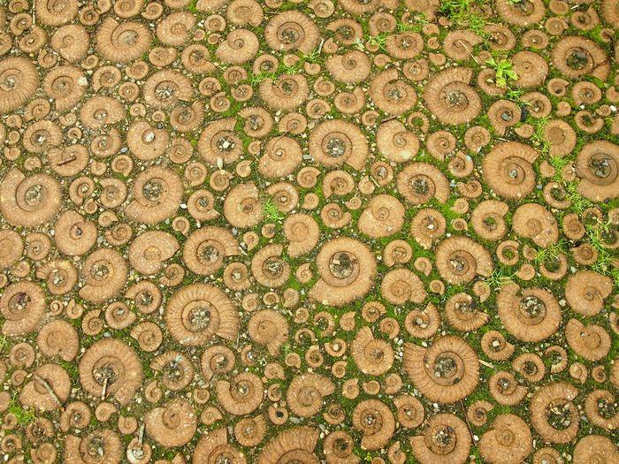 Full frame shot of ammonites on surface