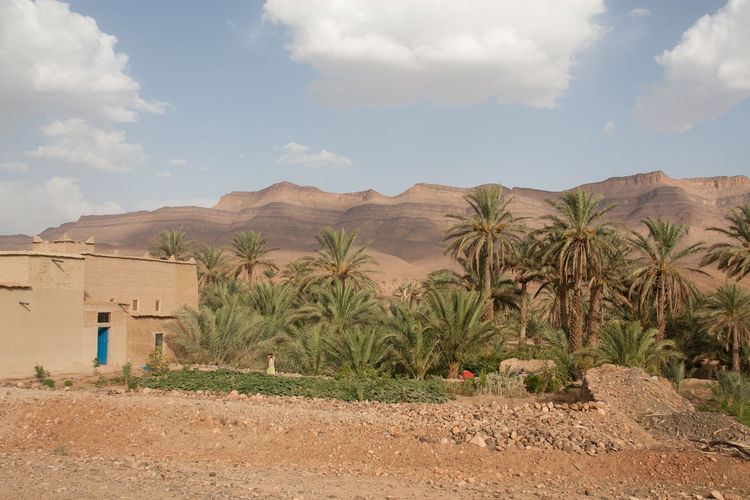 House by date palm trees on arid landscape near rocky mountains