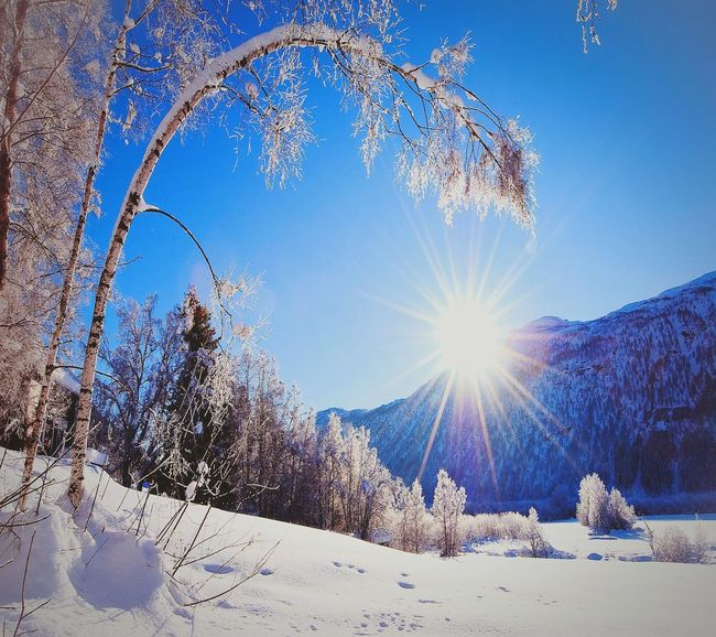 Snow Sunlight Sun Winter Cold Temperature Blue Nature Beauty In Nature Sunbeam Sky Low Angle View Outdoors No People Day EyeEm Gallery Popular Photos My Photography Eyeemphoto EyeEmBestPics EyeEmPaid First Eyeem Photo EyeEm Best Shots My Favorite Photo EnjoytheNewNormal Looking At Camera