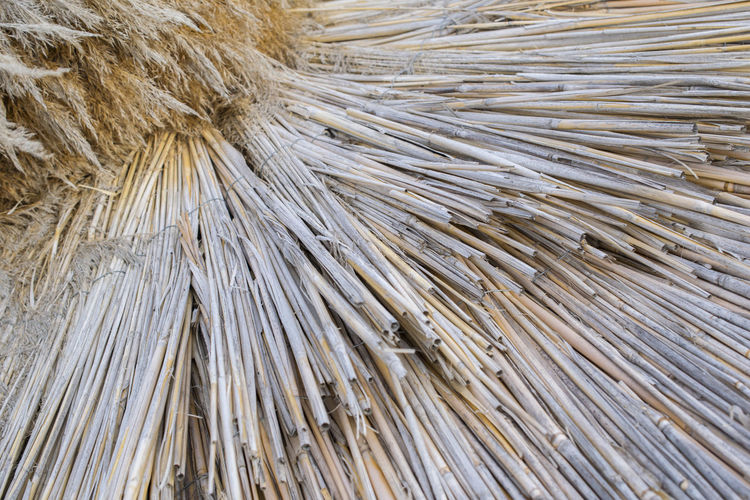 Umbrella Beach Backgrounds Bamboo - Material Close-up Pattern Plant Textured  Wood - Material Wooden Texture
