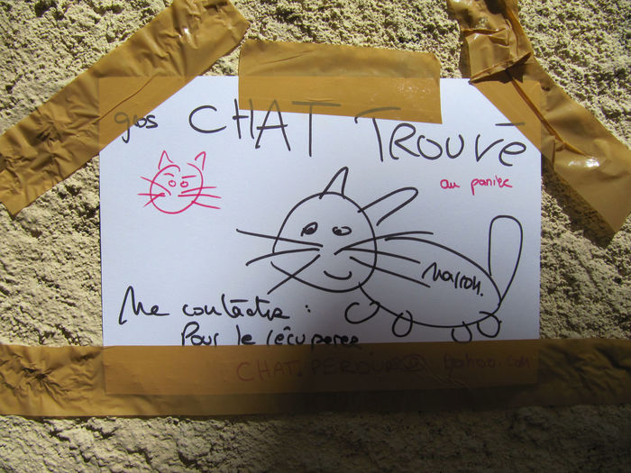 French Language Wall Cat Close-up Communication Draw Hand Writing Hanged Ad Message No People Paper Text