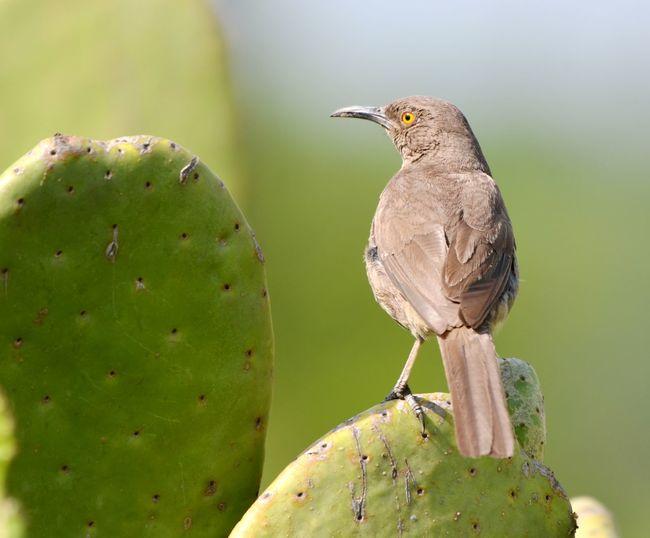 Rear view of a bird looking away