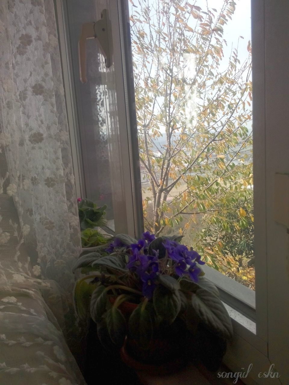 window, flower, no people, nature, indoors, growth, plant, curtain, day, beauty in nature, fragility, close-up, freshness