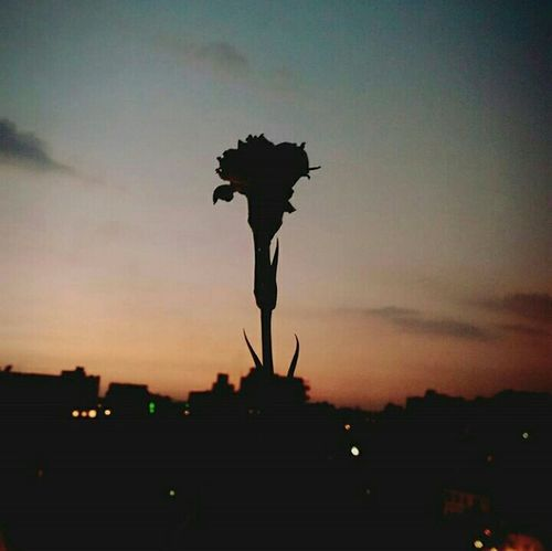 Silhouette City Outdoors Sky People Scenics Playwithlight No People Sunrays Taking Photos Light And Shadow Beauty Hello World Blindside SunsetsLifeasiseeit Lifeasitshouldbe Everydaycairo Flowers, Nature And Beauty Flower Head