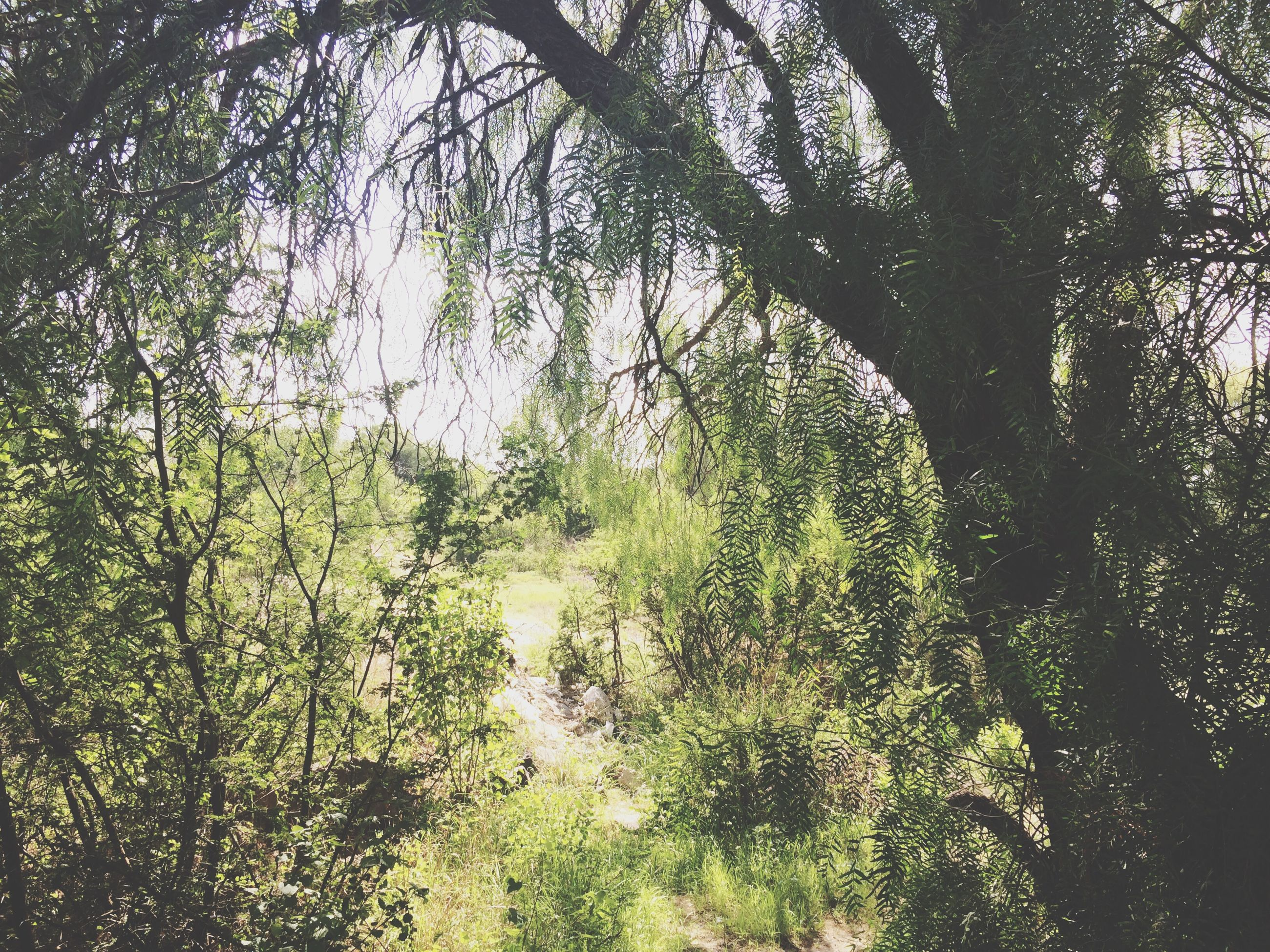 tree, growth, branch, low angle view, tranquility, nature, green color, beauty in nature, leaf, forest, tree trunk, day, sunlight, outdoors, tranquil scene, no people, plant, growing, lush foliage, scenics
