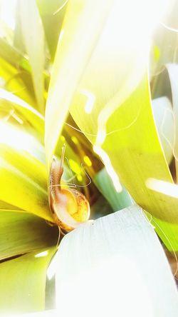 EyeEm Nature Lover EyeEmNewHere Shotongalaxys7edge EyeEm Best Edits Refraction Close-up Leaf Vein Leaves