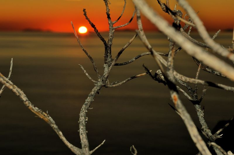 Close-up of frozen plant during sunset