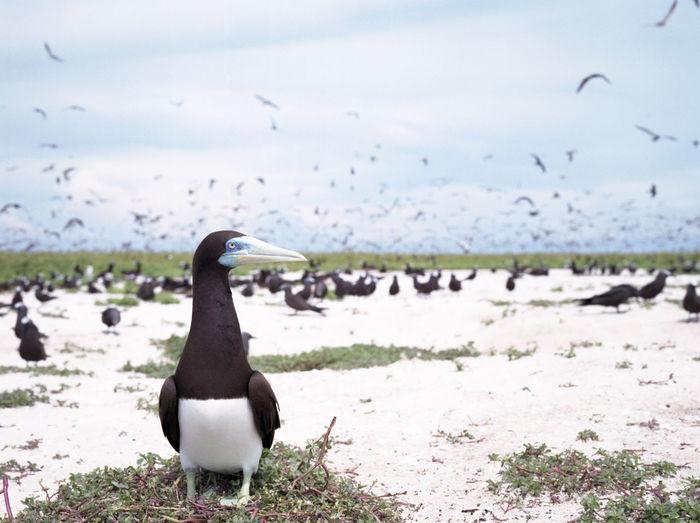Birds Birds🐦⛅ Booby Filmisnotdead Brownbooby Island