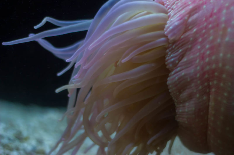 Anenome Close-up Pastel Power Colors Fragility Natural Pattern Saltwater Sea Life UnderSea Underwater Natures Diversities