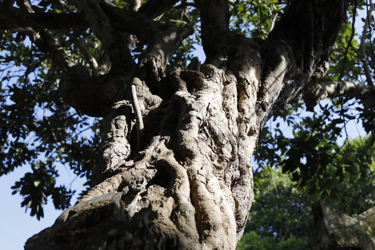 Con Dao lively Beauty In Nature Branch Close-up Day Focus On Foreground Growth Low Angle View Nature No People Outdoors Sunlight Tree Tree Trunk