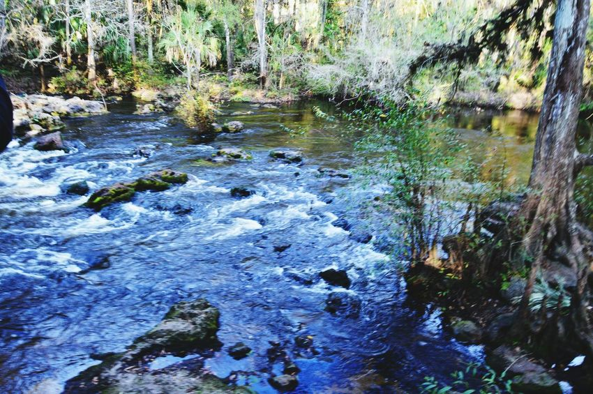 Getting In Touch Escaping Taking Photos Outdoors Hiking Nature Forest River Trees Landscape