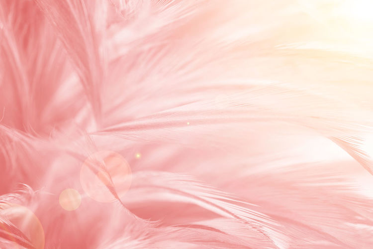 Pink Color Close-up Full Frame Plant Backgrounds No People Fragility Flower Vulnerability  Softness Flowering Plant Beauty In Nature Nature Extreme Close-up Freshness Growth Day Feather  Macro Abstract Backgrounds