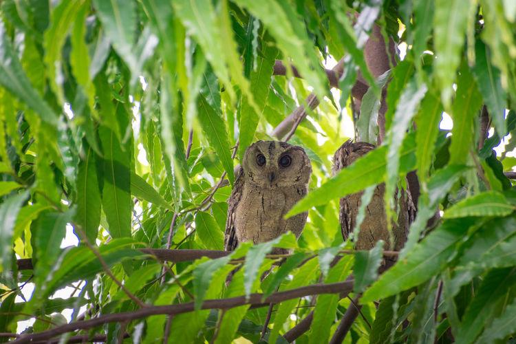 hello Mr OWL Wild Wildlife Nature Photography Wildlife Photography Nikonphotography Tree Leaf Branch Green Color Close-up Owl Yellow Eyes Bird Of Prey