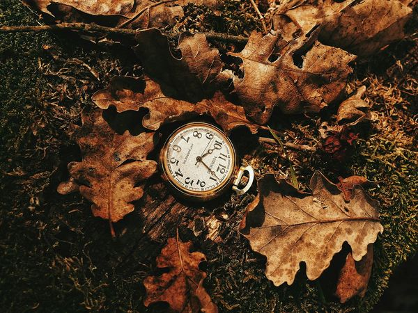 Tuscany. Lieblingsteil Time Clock Old-fashioned Vintage Vintage Photo Autumn Colours Leaves🌿 Leaves_collection Woods Woods And Color Vintage Objects Tuscany Composition Composition In Orange And Yellow Garden Photography Gardens Color Orange Fallen Fallen Leaves EyeEmNewHere Be. Ready.
