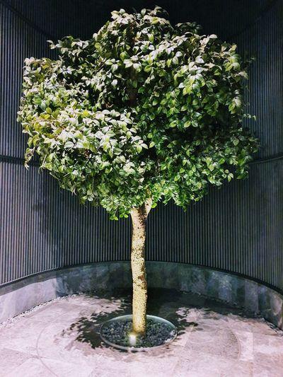 tree Tree Plant