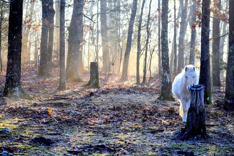 Horse Pony Tree