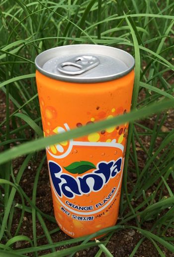 Playing With The Animals Fanta