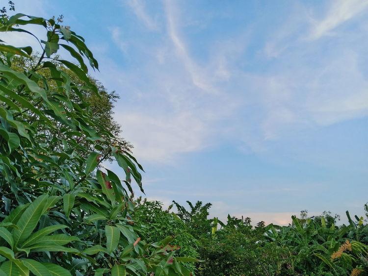 Tree Leaf Blue Sky Green Color